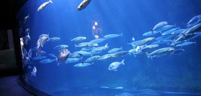 présentation de l'aquarium de Paris